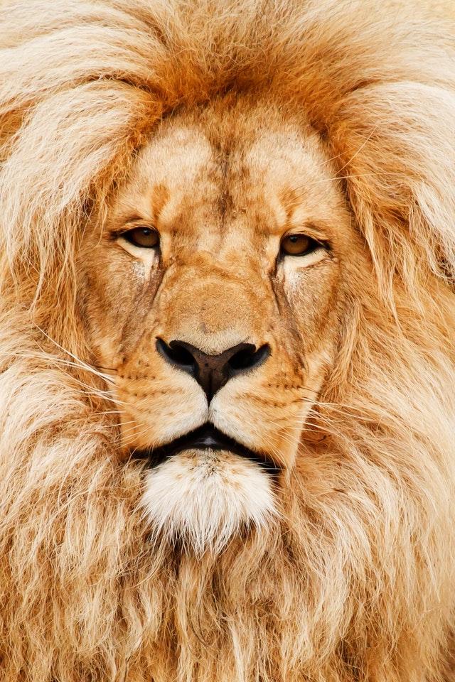 yellow-animal-eyes-fur-41315-min.jpg